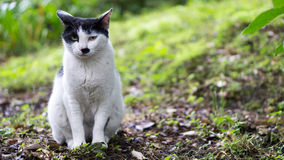 Cat watching toward camera in the forest. Black and white cat looking toward camera Royalty Free Stock Photo