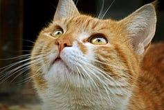 Cat is watching towards the sky stock photos