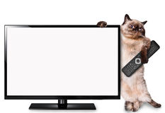Cat watching TV. Stock Photos