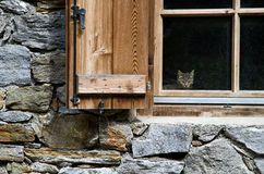 Cat watching from a window Stock Image
