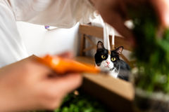 Cat watching woman cutting grass Stock Photos