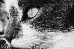 Cat is watching you stock photo
