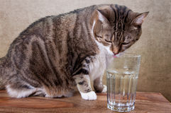 Cat with water Royalty Free Stock Image
