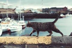 Cat, Water, Small To Medium Sized Cats, Cat Like Mammal Royalty Free Stock Image