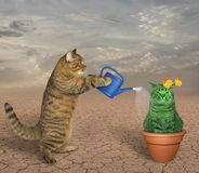 Cat waters unusual cactus. The cat waters a pot with an unusual cactus in the desert royalty free stock image