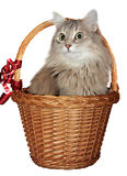 Cat in a wattled basket Royalty Free Stock Photos