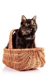 Cat in a wattled basket Royalty Free Stock Photography