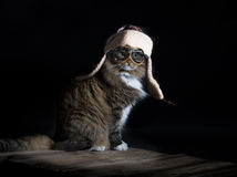 Cat Wearing Aviator Cap. A brown tabby cat wearing vintage style aviator cap and goggles royalty free stock photo