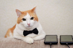 Cat wearing black grooms bow tie at the wedding. White-a red cat in bow tie lies next to the phones Royalty Free Stock Image