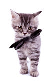 Cat wearing a black neck bow Stock Images