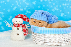 Cat Wearing Blue Knitting Hat In A Basket Royalty Free Stock Photos