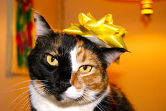 Cat Wearing Bow Stock Image
