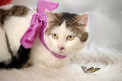 Cat wearing a bow Stock Photography