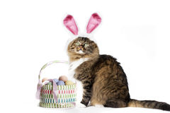 Cat Wearing Bunny Ears Stock Image