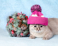 Cat wearing cap lying next to Kissing Bough Royalty Free Stock Photography