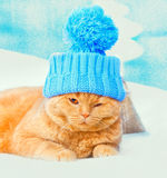 Cat wearing a cap with pompom. Portrait of cat wearing a cap with pompom Stock Photo