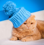 Cat wearing a cap with pompom. Portrait of cat wearing a cap with pompom Royalty Free Stock Images