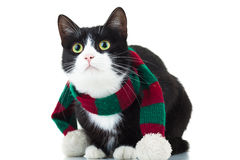 Cat wearing christmas scarf is looking up Stock Image