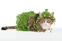 Cat wearing a Christmas tree is isolated on white Stock Photo