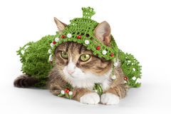 Cat wearing a Christmas tree is  on white Royalty Free Stock Image