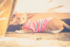 Free Cat Wearing Clothes And Lying In The Sun Stock Images - 59554024