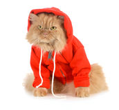 Cat wearing coat Royalty Free Stock Photo