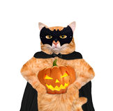 Cat wearing costume for halloween with a pumpkin. Royalty Free Stock Photos