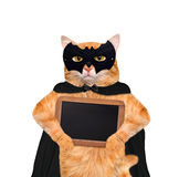 Cat wearing costume for halloween with wooden blank board. Stock Photos
