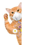 Cat wearing a face protective mask . Royalty Free Stock Image