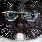 Cat wearing glasses Stock Photos