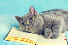 Cat wearing glasses Royalty Free Stock Photography