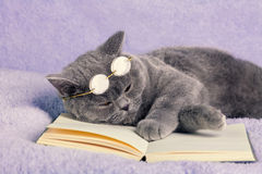 Cat wearing glasses sleeping on the book Stock Photos