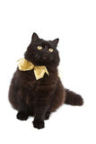 Cat wearing golden bow isolated Royalty Free Stock Images