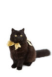 Cat wearing golden bow isolated Stock Photo