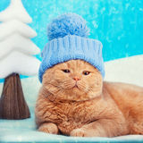 Cat wearing hat Stock Photography