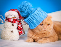 Cat wearing hat Royalty Free Stock Photography