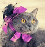 Cat wearing hat with purple ribbons Stock Photos