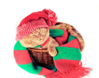 Cat wearing hat and scarf Royalty Free Stock Photos