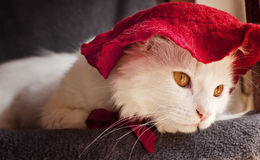 Cat wearing a hat Royalty Free Stock Image