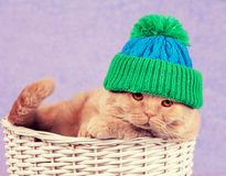 Cat wearing a knitted cap Royalty Free Stock Photos
