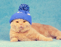 Cat wearing knitted cap Royalty Free Stock Images