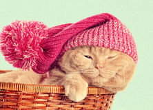 Cat wearing knitted hat royalty free stock photography