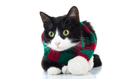 Cat wearing knitted red and green scarf looks to side Stock Photography