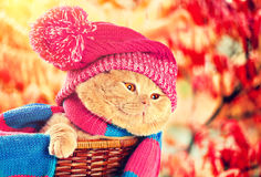 Cat wearing knitting hat Royalty Free Stock Photos
