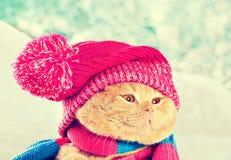 Cat wearing knitting hat Royalty Free Stock Photos