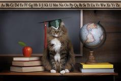Cat Wearing Mortarboard imagens de stock