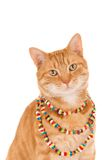 Cat wearing a necklace Royalty Free Stock Images