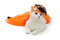 Cat Wearing Orange Halloween Outfit royalty-vrije stock fotografie