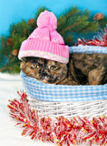 Cat wearing pink knitting hat Stock Photos