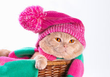 Cat wearing pink knitting hat. Cat wearing a pink knitting hat with pompom and a scarf lying in a basket Stock Photo